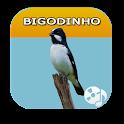 The Canto de Bigondinho icon