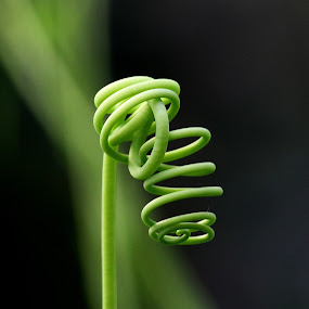 Twirl by Adam Griffin - Nature Up Close Flowers - 2011-2013 ( green twirl )