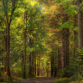 The road less traveled. by Dale Slater - Landscapes Forests ( forest, road, fairytale, trees, serene )