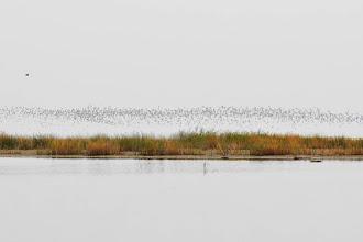 Photo: About 4000 gulls