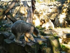 Photo: Gianna kommt des Wegs - Knut bleibt wachsam ;-)