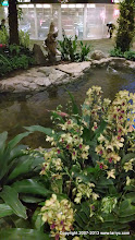 Photo: Singapore Changi Airport, they have multiple Koi ponds in the airport!