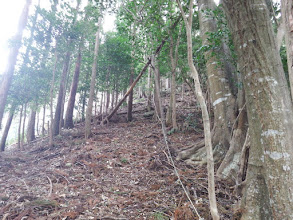 稜線への最後は急登