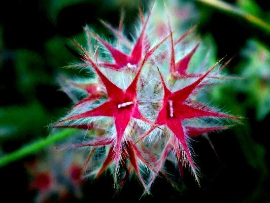 Un fiore di stelle di ileana