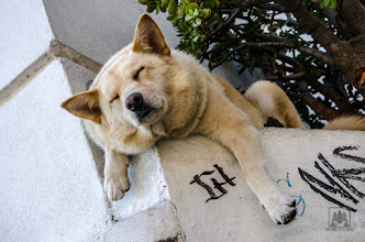 Photo: There's nothing quite like a cat nap... especially if you're a dog.  #canine #Chile #dog #sleeping #Valparaiso   http://www.twoponiesinthewoods.com/By-Pony/Ed/i-GB7VkMp/A