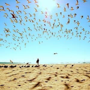 east beach birds scatter DSC_0446.jpg