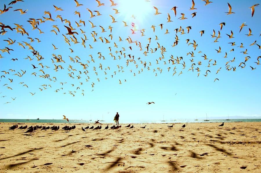 The flock by Greg Harrington - News & Events World Events