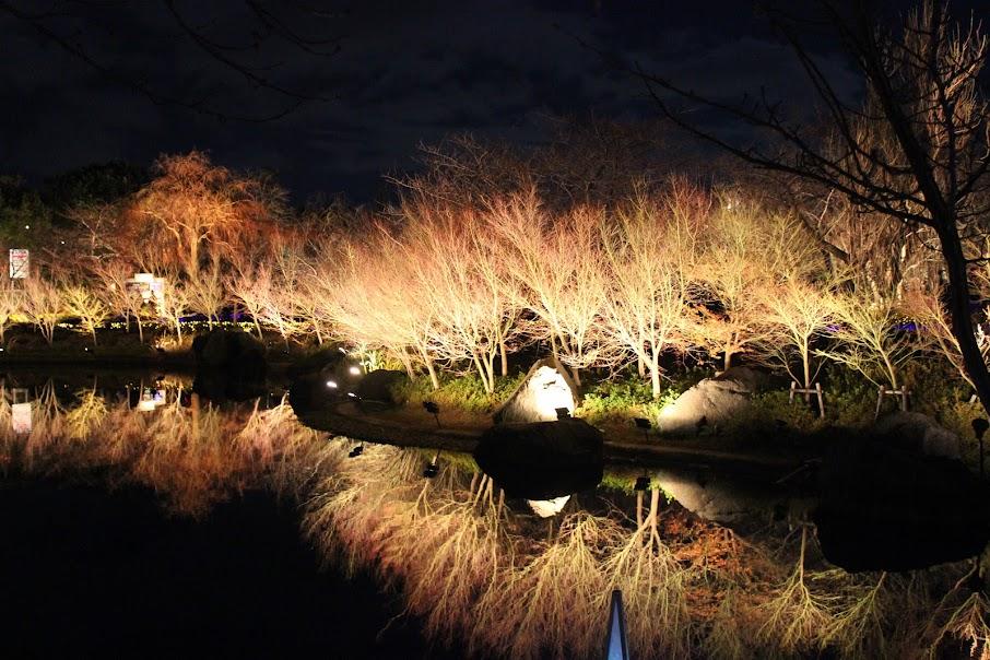 Волшебная зимняя Япония.
