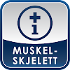 Muskel-Skjelett (IM-App)
