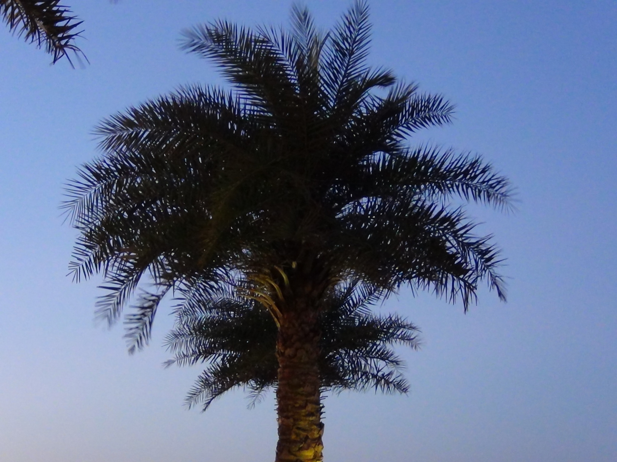 Photo: 2 in 1 palm tree