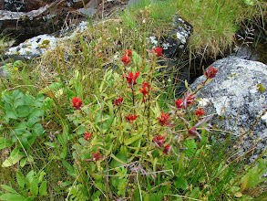 Photo: Wildflowers on Change Island.