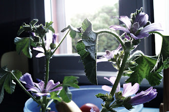 Photo: He adoptado unas flores callejeras. Seres vivos tan polvo de estrella como los humanos.