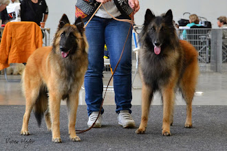 Photo: Int. Karlsruhe 2014 Kwando with Grimmendans Niva - they have the same Grandmother (Canela)