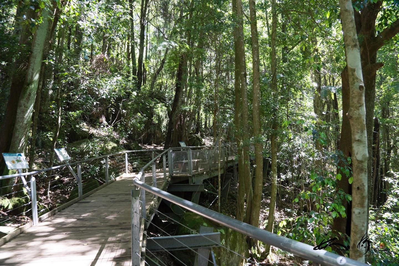 樹海の中の遊歩道