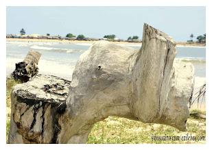 Photo: ma souche éléphant ! Ezile Bay