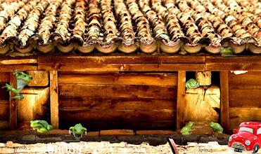 Photo: Frog house