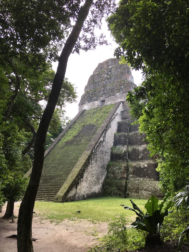 Tikal was abandoned around 10th century. Some possible explanations are overpopulation and deforestation