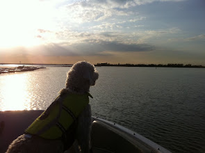 Photo: 2010-11-23 sophie golden doodle lake trip november in texas