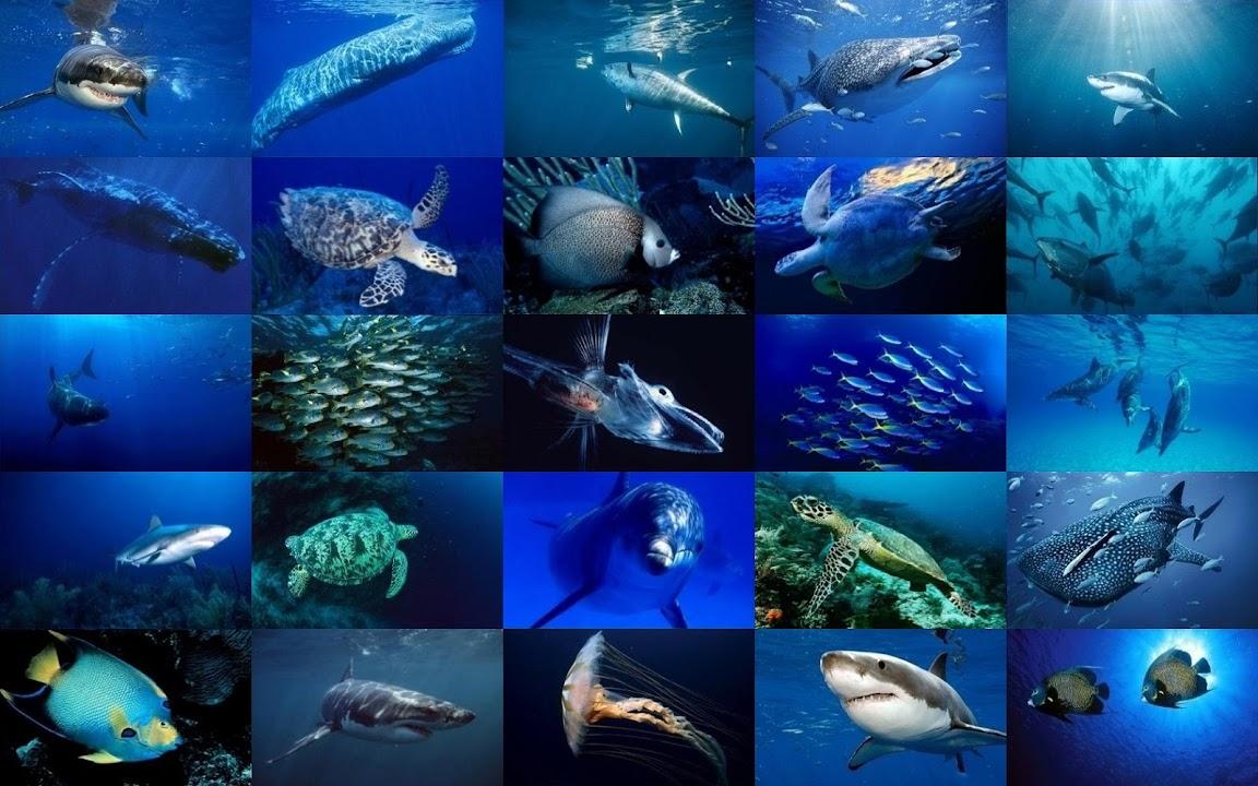 Download Sea Life Wallpaper For Android Sea Life Wallpaper Apk