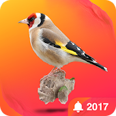 Bird Calls - Sounds & Ringtones