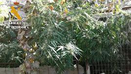 Plantación de marihuana localizada en Gérgal.