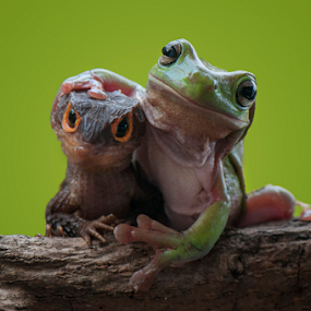Friendship by Riza Arif Pratama - Animals Reptiles ( animals, frog, green, croc skink, friendship, amphibian, reptile, animal )