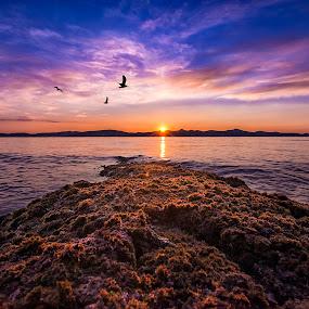 All that i am by Davor Strenja - Landscapes Waterscapes ( calm, red, blue, sunset, croatia, seagulls, sea, croatia365, zadar, sun )
