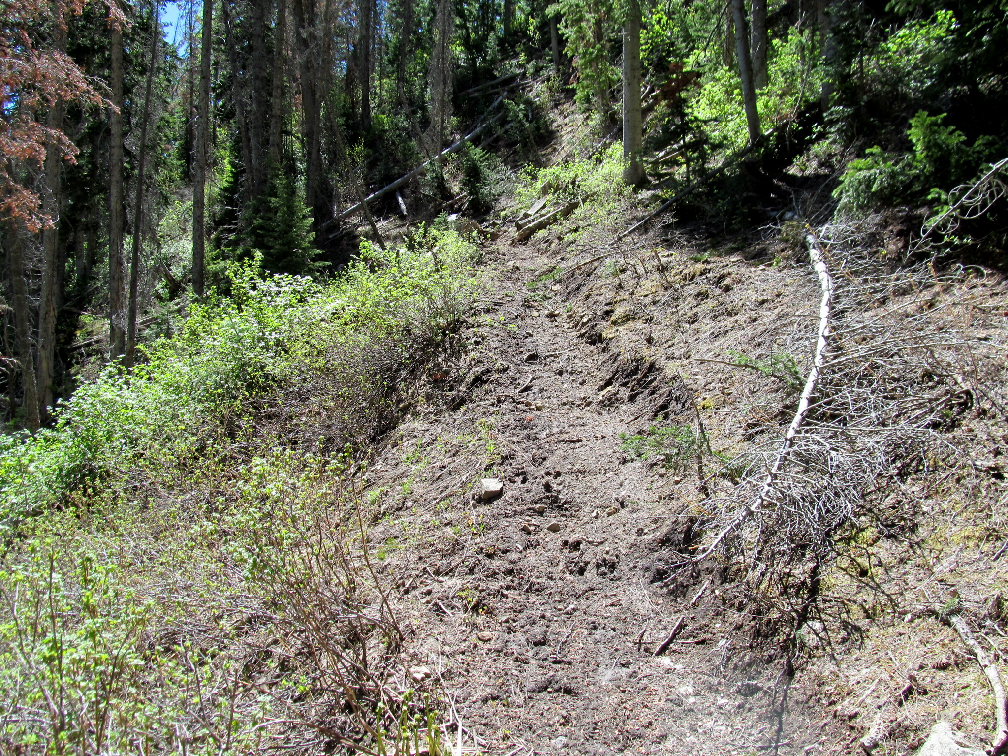 Photo: Newly-cut trail