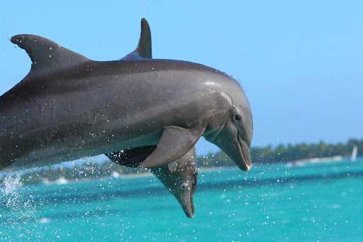 dolphins-in-punta-cana.jpg - Dolphins in a show in Punta Cana, Dominican Republic.