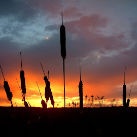 Marsh Sunset by Bill Diller - Landscapes Sunsets & Sunrises ( michigan, nature, shapes, sunset, calmness, tranquility, marsh, cattails, colors )
