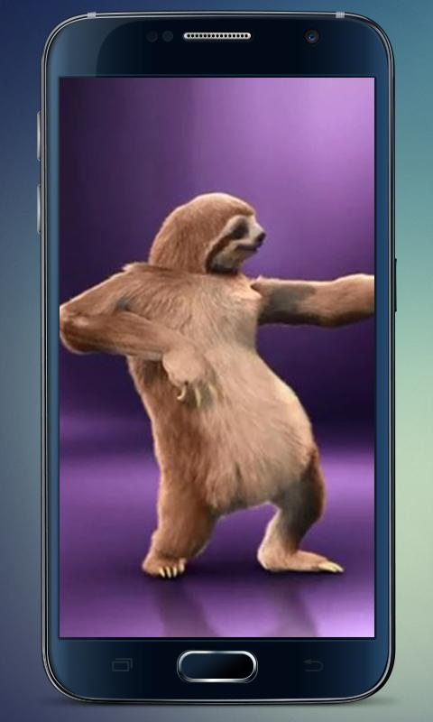 Dance of sloth live wallpaper android apps on google play - Sloth wallpaper phone ...