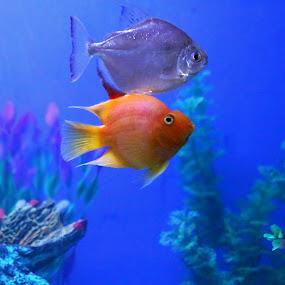 FSS by Anup Kumar Adhikari - Animals Fish