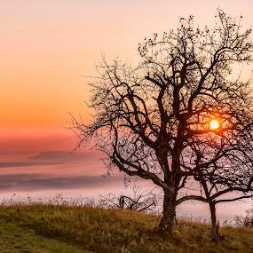 Drevo v jutru. by Milan Mihalič - Nature Up Close Trees & Bushes (  )