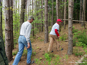 Photo: Looking for regeneration of trees on the edge zone of forest and meadow