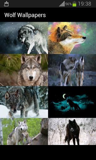 늑대 배경 화면