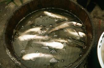 Photo: 11098 鎮江/自由市場/魚