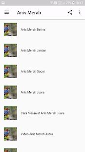 Anis Merah Ngekek Panjang Juara - náhled