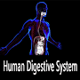 About Human Digestive System APK icon