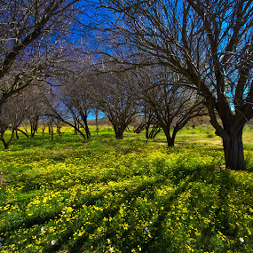 Flowers all over by Trippie Visser - Landscapes Prairies, Meadows & Fields ( sky, grass, trees, flowers, shade )