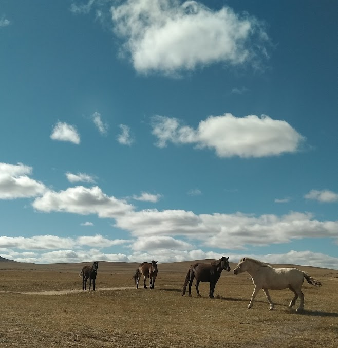 道を渡る馬