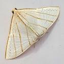 Triangle Hooktip