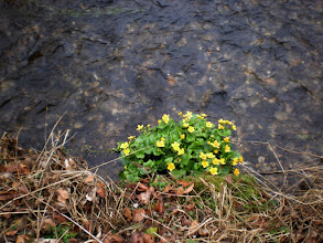 Photo: some early flowers at the creek