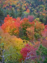 Photo: Same trees. Colors like neon.