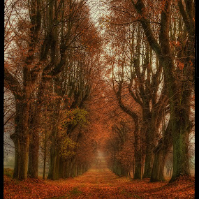 linden alley II by Petr Klingr - Nature Up Close Trees & Bushes ( hdr     autumn     alley     trees     leaves     chapel,  )
