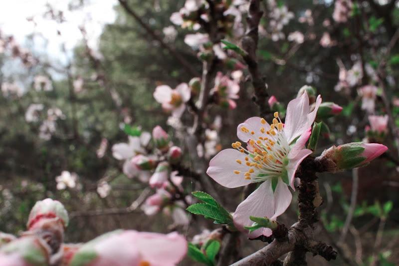 Immersa in un mare rosa di alessia_de_marzo