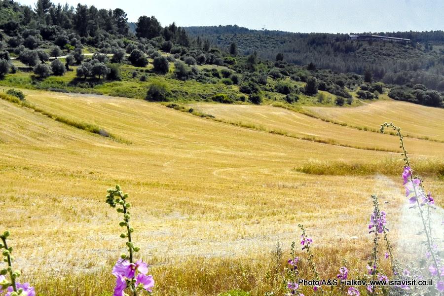 Пейзаж Иудеи.