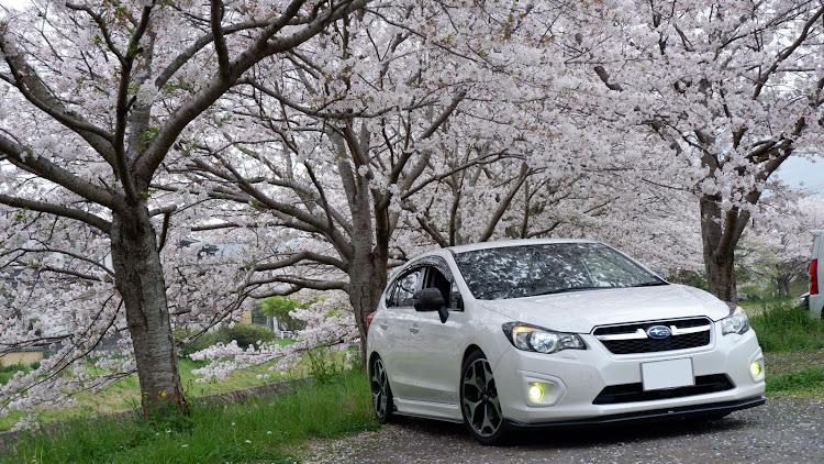 インプレッサ スポーツ GP6の桜と愛車,桜とコラボ,桜とスバル,桜に関するカスタム&メンテナンスの投稿画像1枚目