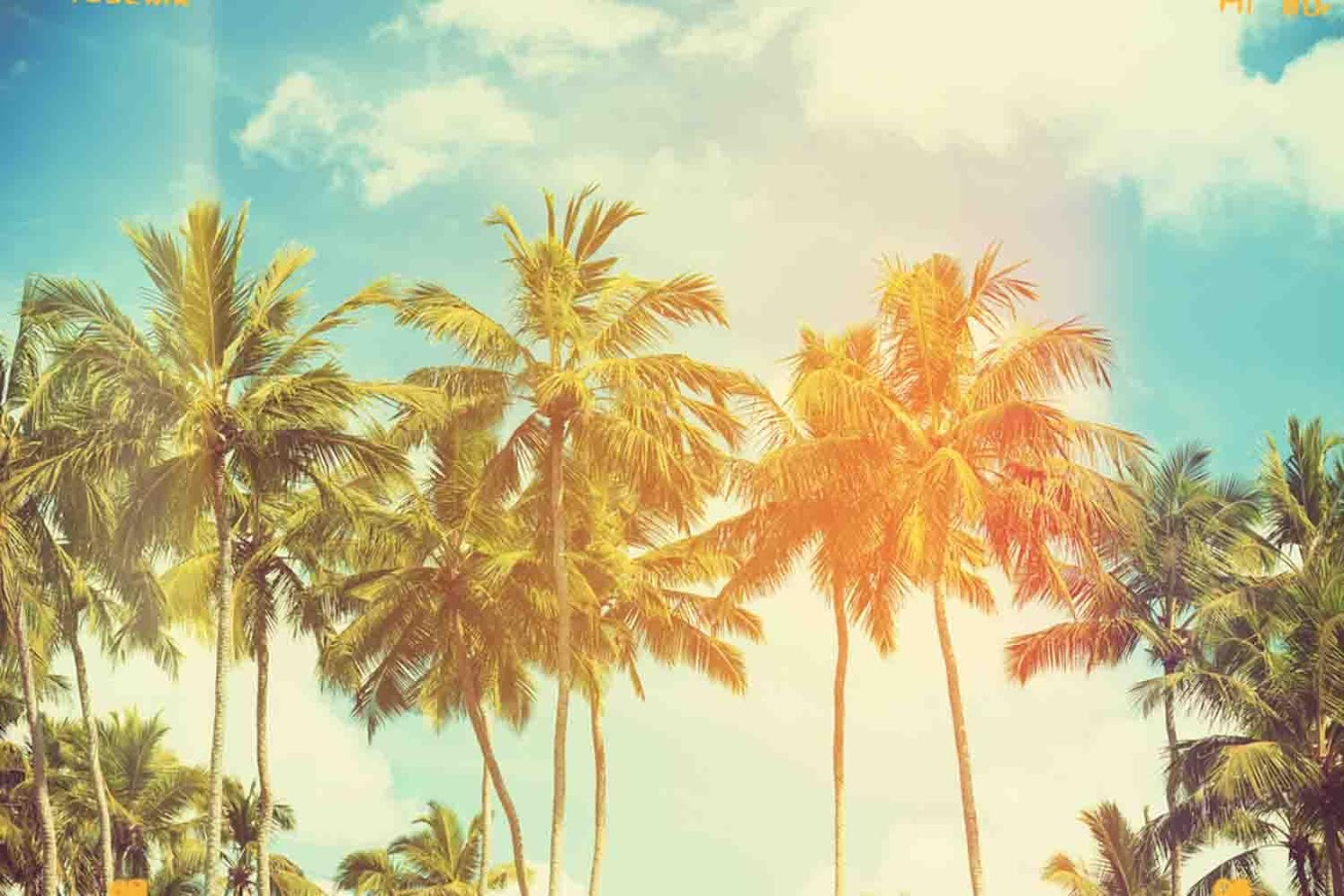 Tree Wall Paper wallpaper palm tree - android apps on google play