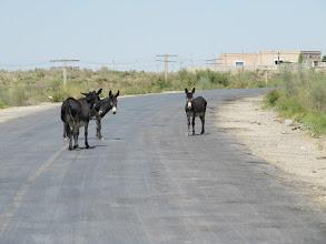 Photo: Day 161 -  No-Man's Land (Lots of it), Between Turkmenistan and Uzbekistan