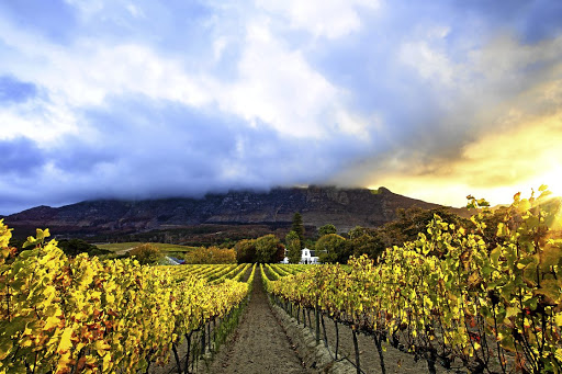 Picturesque plantation: The South African wine industry is the ninth-largest producer of wine in the world and contributes 4% to global production. Picture: ISTOCK